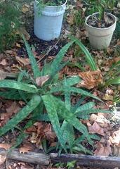 leavesingarden1